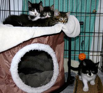 Foster Kittens V - Apr 12