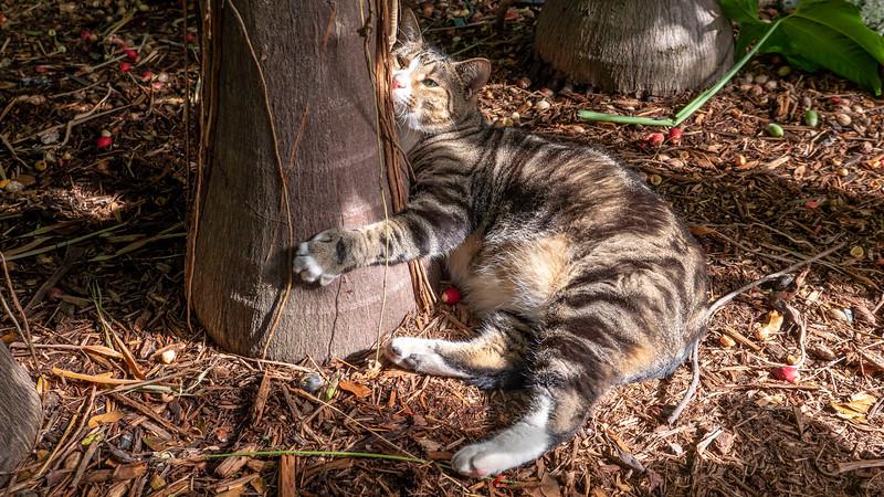 Florida-Keys-Key-West-Hemingway-Home-Cats-18.jpg