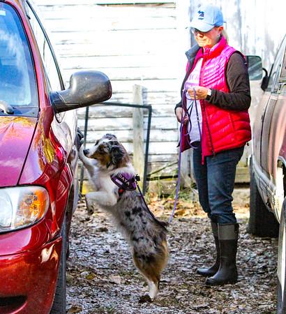 Sandie & Daya Miniature American Shepherd Vehicle Search