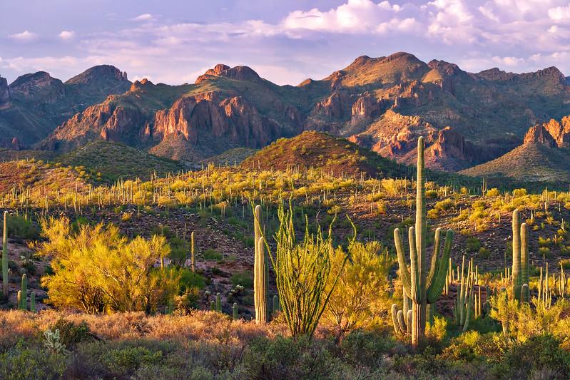 408 Saguaro