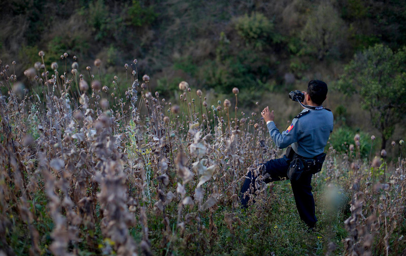 . A Myanmar police officer photographs a harvested poppy field in central Shan state, Myanmar on Feb 19, 2013. Far from Myanmar\'s postcard-perfect pagodas and colonial relics, the remote mountain villages of southern Shan State do not appear on maps of Myanmar or in any guide books. In obscurity, they have been ground zero for Myanmar\'s drug trade which has thrived on poverty and corruption. (AP Photo/Gemunu Amarasinghe)