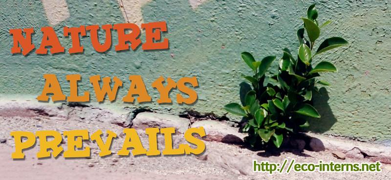Eco-Interns-2012_NatureAlwaysPrevails_web.jpg