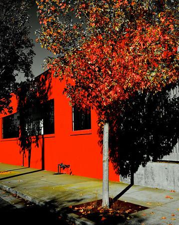 Autumn in Emeryville