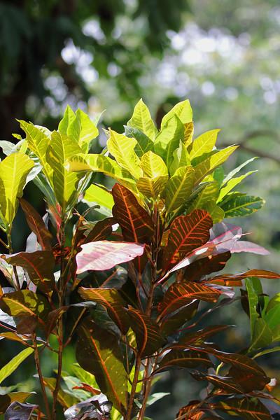 Rainforest Plant.JPG