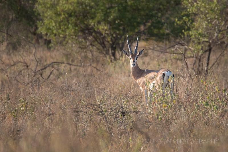 Jay Waltmunson Photography - Kenya 2019 - 133 - (DSCF3571).jpg
