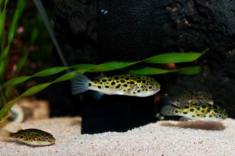 Aquarium-0013