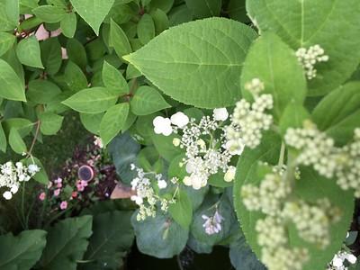 Summer Flowers 2015