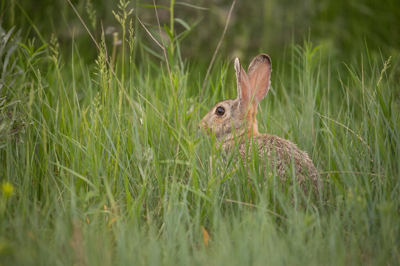 hare-4137.jpg