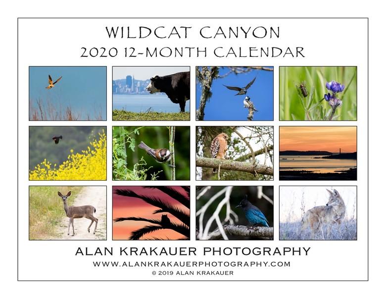 Wildcat 2020 Back.jpeg
