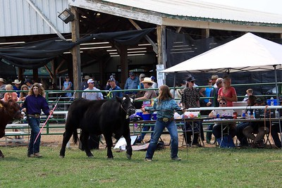 Senior Beef Showmanship 2