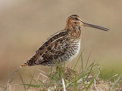 20200514 Peterborough Airport Birds