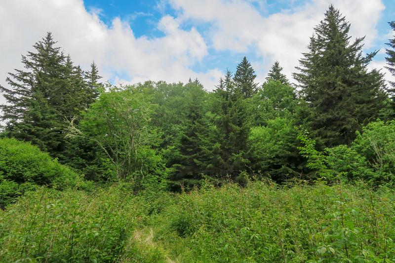 Green Mountain Trail -- 5,800'