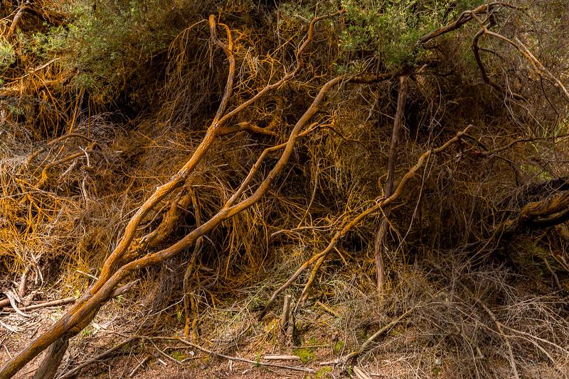 Wai-O-Tapu: selbst die grünen Algen färben sich orange