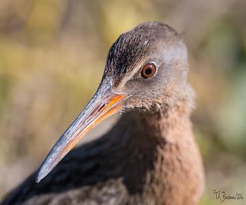 2016 Birding