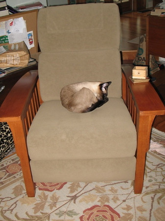 Little Jupiter on the Morris Chair
