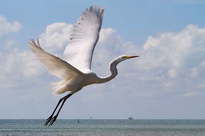 Florida Keys Bird Sanctuary