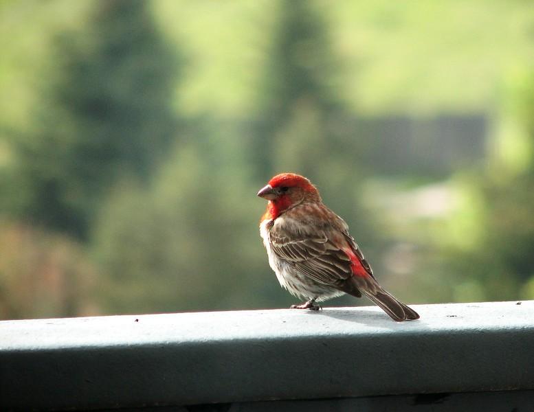 birds (169).jpg