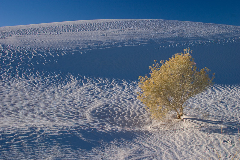 'Attitudes' - White Sands National Monument, Utah