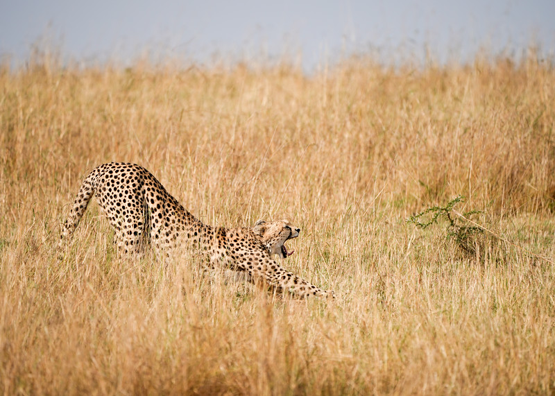 safari-2018-72.jpg