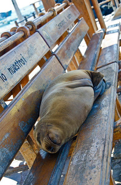 Park bench snooze