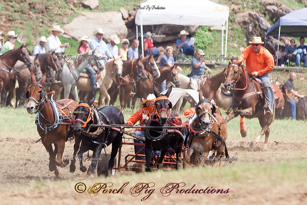 Sunday 4 up Mules National Championship Chuckwagon Races