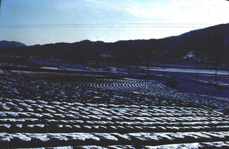 Rice paddy in the winter.