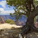 Grand Canyon North Rim - KW - images-6 - KCOT.jpg