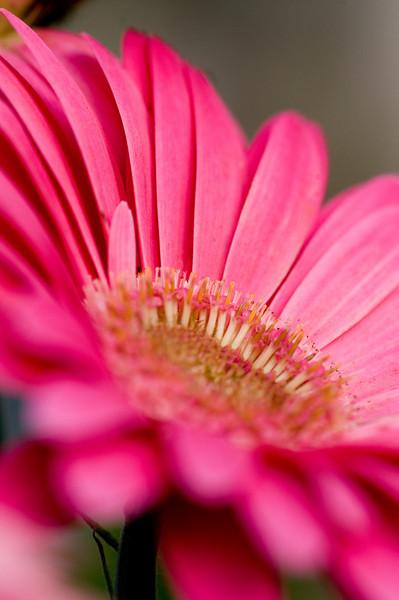 PinkOblique.jpg