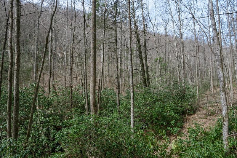 Pilot Cove-Slate Rock Trail -- 2,970'