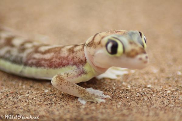 Swakopmund and Namib Desert