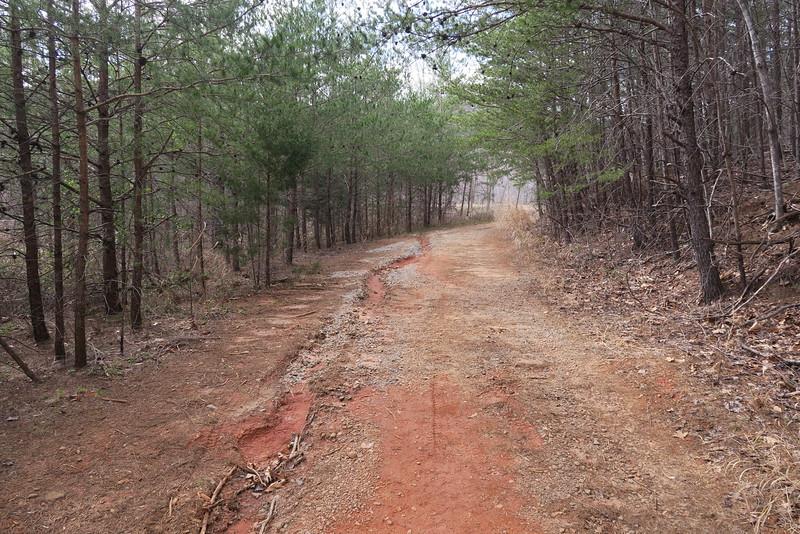 Palmetto Trail
