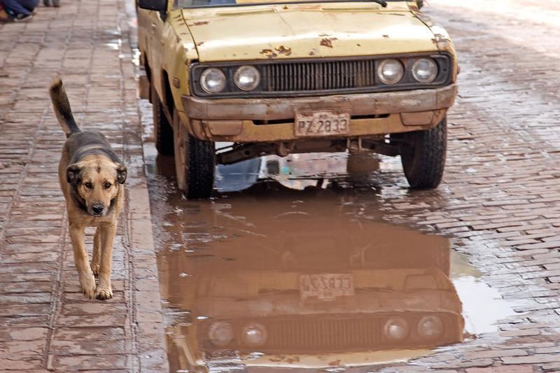 0568_Cusco_Dog_v2.jpg