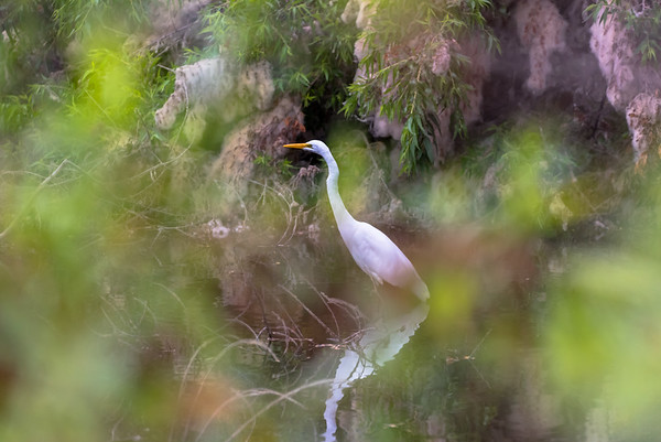 San Joaquin Wildlife Sanctuary, Aug. 07, 2016