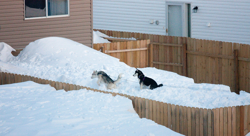 Dogs on a snowbank