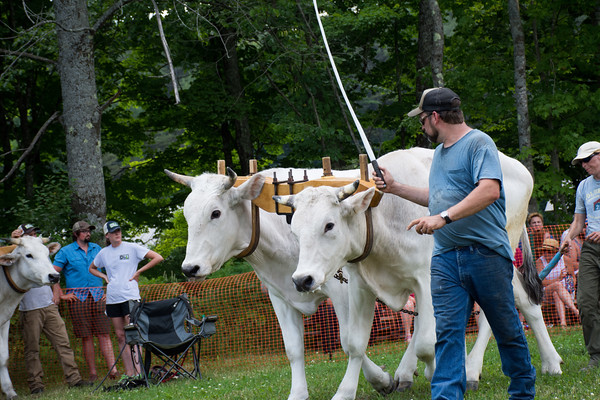 27th Annual Reading Ox Pull