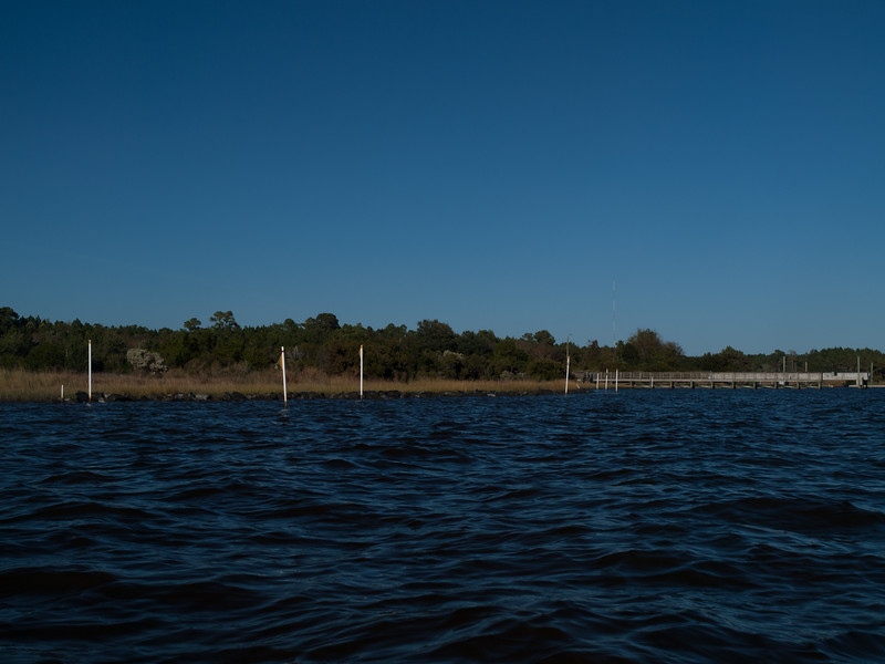 Living shoreline SW of pier.