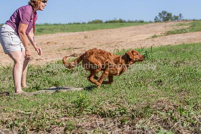 test dog land