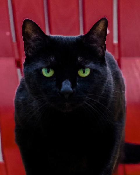0 20140423SCPA midnight black cat  20 copycat009.jpg