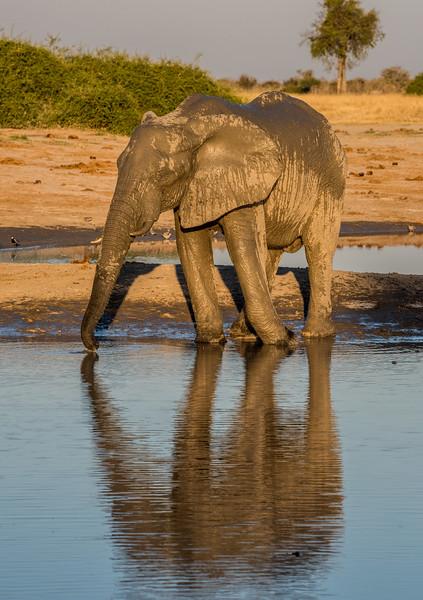 Botswana_June_2017 (4084 of 6179).jpg