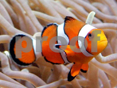 finding-nemo-to-be-told-in-navajo-language