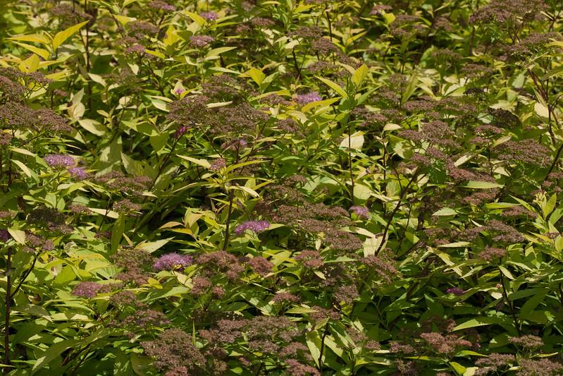 2009 06 30_NY Botanical Gardens_0768.jpg