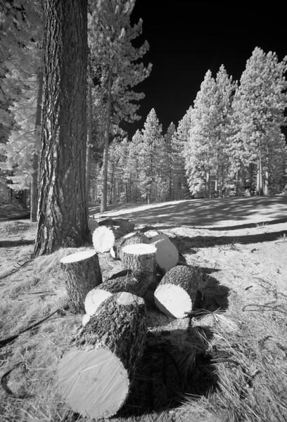 tahoe_566.jpg