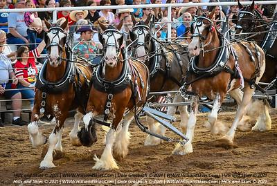 Pretty Prairie Rodeo