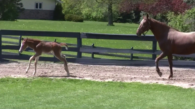Video of Felix's first day outside, two days after his birth. With his mom, Andie (reg. A Little Commotion).