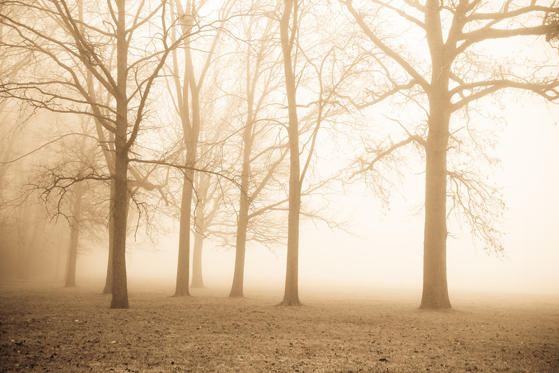 fog trees michigan forest morning lilacpop-1.jpg