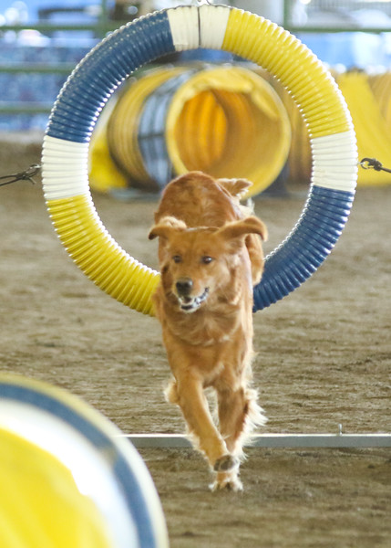 10-31-2015 Border Terrier-2406.jpg