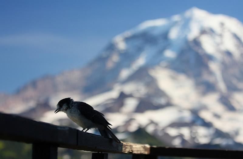 Tolmie Peak 04.JPG