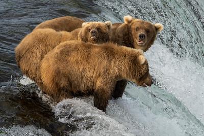 Alaska Bears 2021
