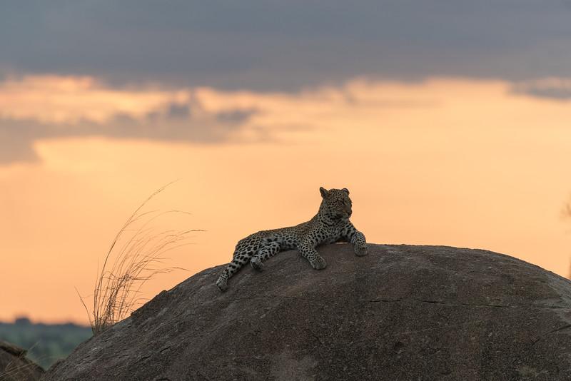 Africa  - 101016- 131.jpg