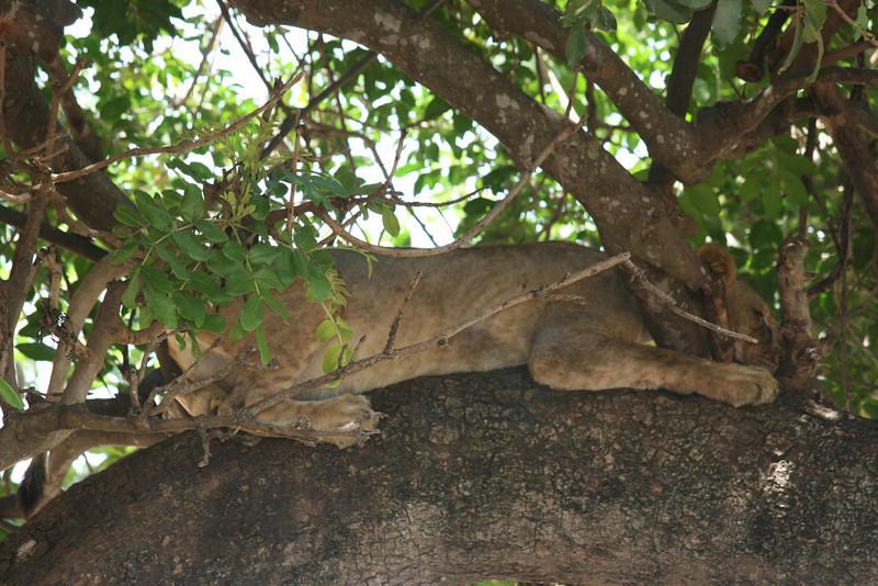 Sleeping in a tree